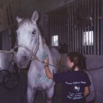 Cross-Ties in the barn aisles for tack-up & grooming