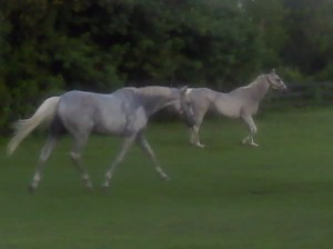 Some of our horses enjoying turnout